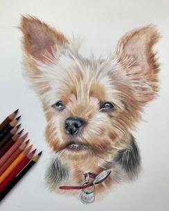 Picturi in creioane colorate